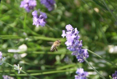 So fleißi wie dieses Bienchen kann ich heute nicht sein.